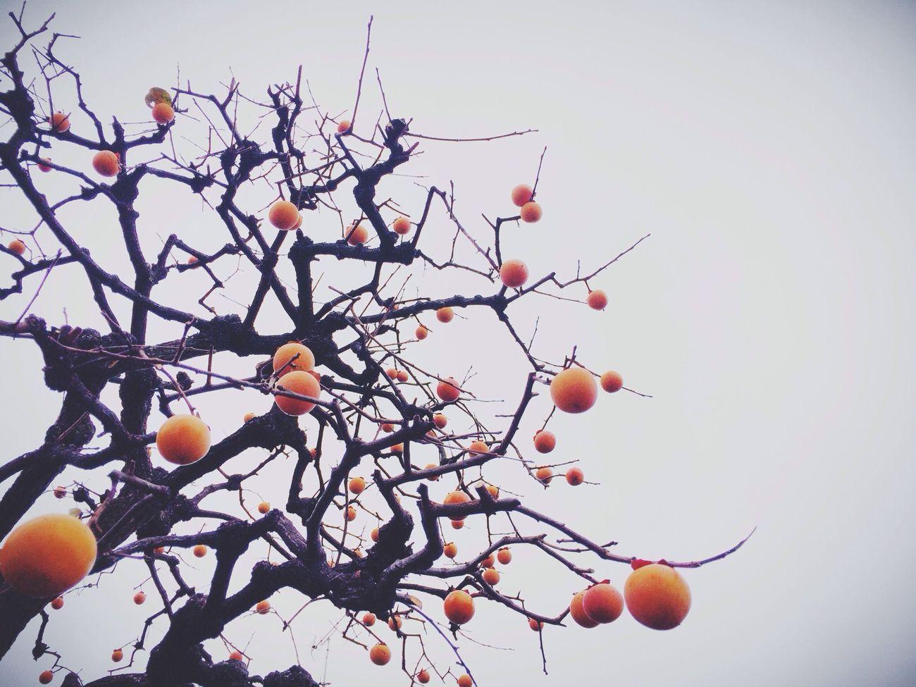 柿ツリー…♪ TreePorn Nature_collection