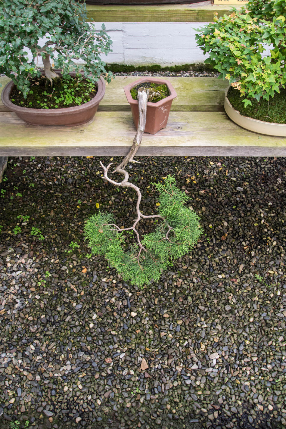 Adventure Beauty In Nature Bonsai Bonsai Tree Day Detail EyeEm Gallery EyeEm Nature Lover Growth Minature Nature Nature Nature_collection No People Old Outdoors Plant Plants Potted Plant Small Tree Tree Tree Tree Trunk Trees Upside Down
