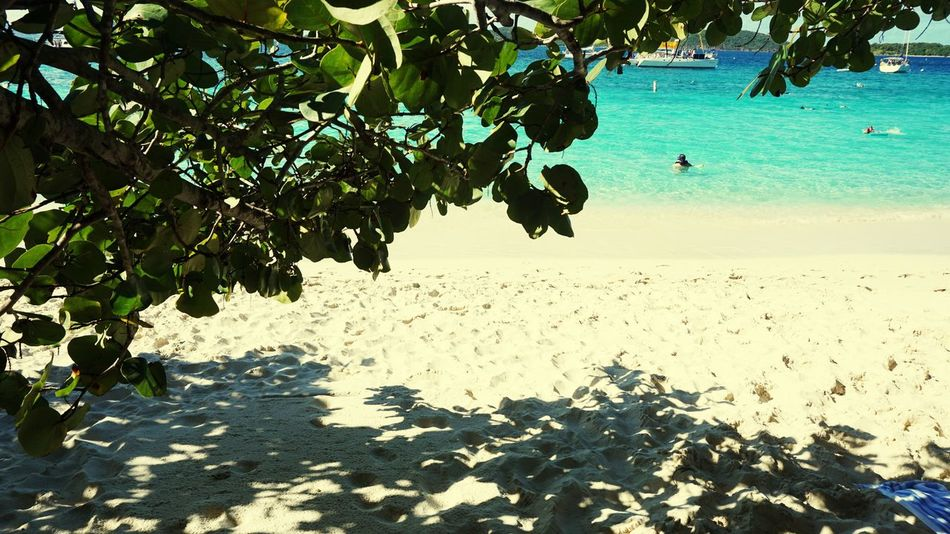 Allure Of The Seas Royal Caribbean Cruise Saint John Virgin Islands Water Nature Leaf Sea Beach Tree Outdoors Beauty In Nature Tranquility Day Real People Sky