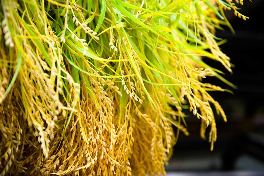 Seeds Harvest