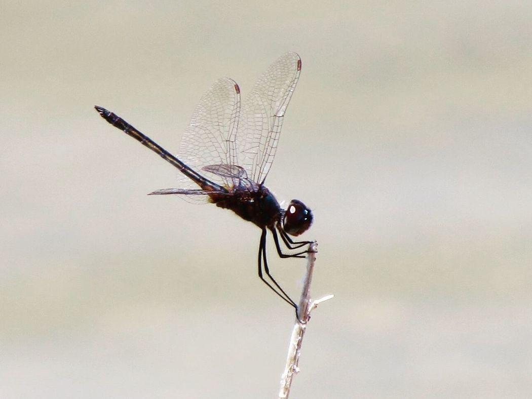 Dragonfly Bugs Photography Hello World Outside Nature Eye4photography  EyeEm