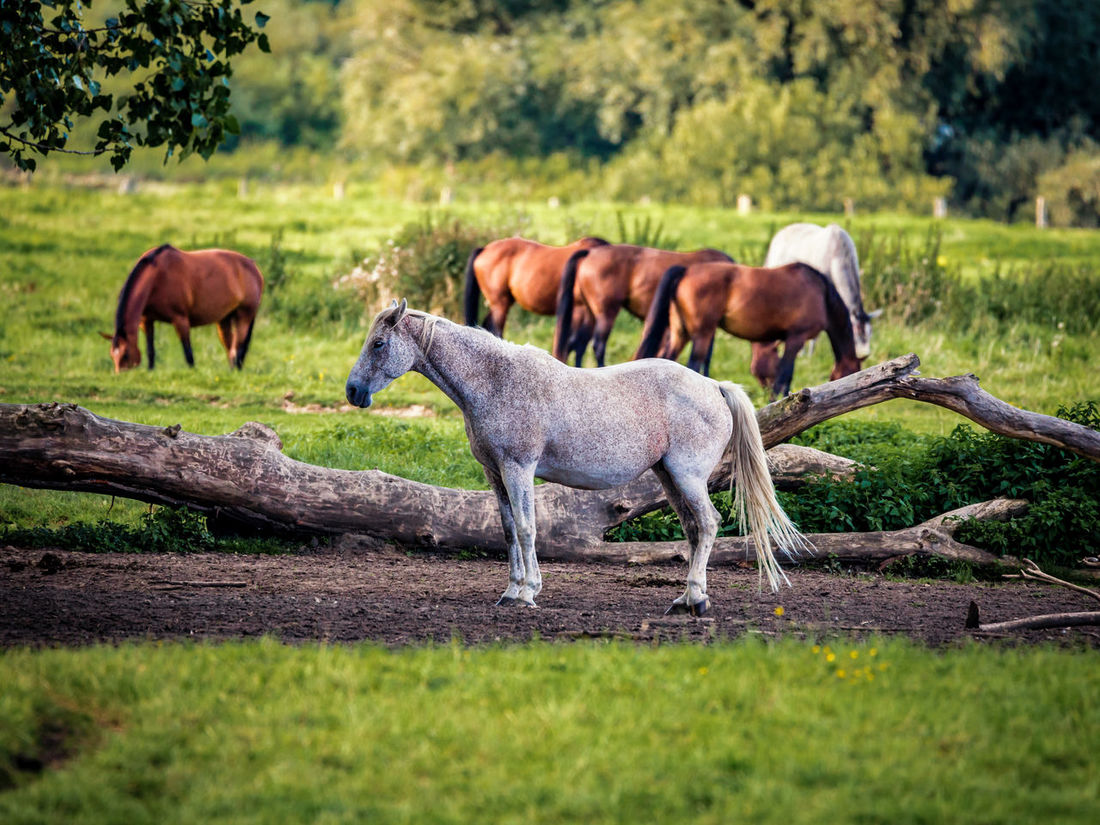 Animal Animal Themes Horse Horse On Meadow Horses Mammal Relaxation Relaxing
