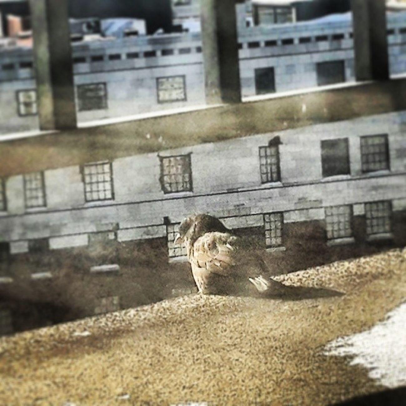 لو أستطيعُ لطِرْتُ إليكِ شَوقاً ، وكيفَ يطيرُ مقصوصُ الجناحِ ؟ تصويري  المصورون_العرب عدستي يومياتي ذكريات مبتعث احتراف طبيعة love سياحة سفر saudiinus طيور usa us كليفلايند اوهايو امريكا cleveland ohio oh euclid winter 2014 lonely missing waiting mobt3th