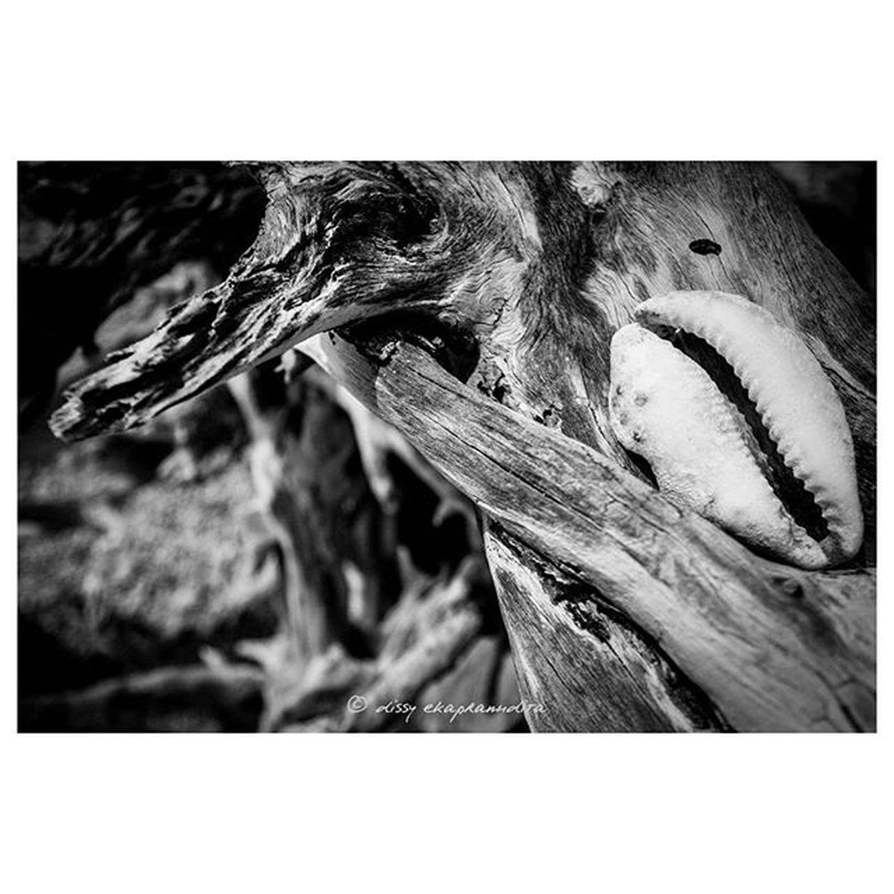 Kewuk Shell Kerang Beach BeautifulIndonesia INDONESIA 1000kata Asiangeographic Natgeoadventure Instalike Instagram Instagood Instadaily Photooftheday Blackandwhite