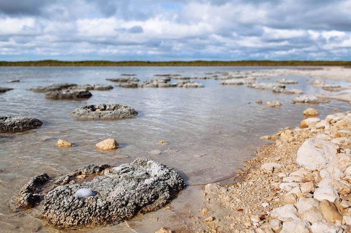 Lake Thetis with stromatolites in Numbing National Park, Western Australia Australia Lake Thetis Perth Beach Beauty In Nature Close-up Cloud - Sky Day Nambung National Park Nature No People Outdoors Rock - Object Sand Scenics Sea Sky Stromatolites Tranquility Water