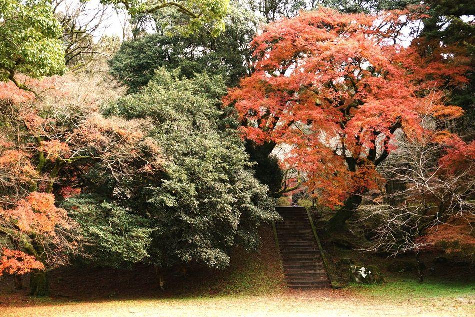 秋月城下町。 Fukuoka,Japan Akizuki Shorttrip Nice Day Looking At Camera Looking Good Nature Photography Talking Photo Nature_perfection Naturelovers