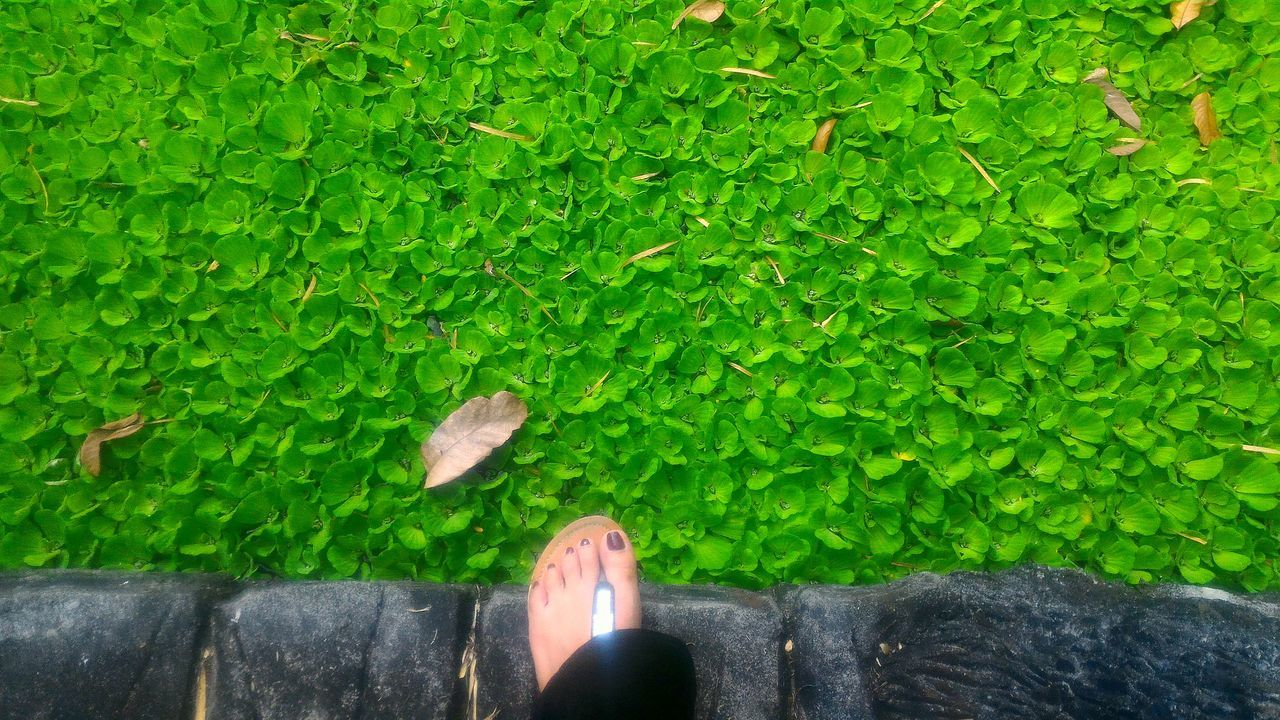 Lilies Green Color Foot Break The Mold EyeEmNewHere