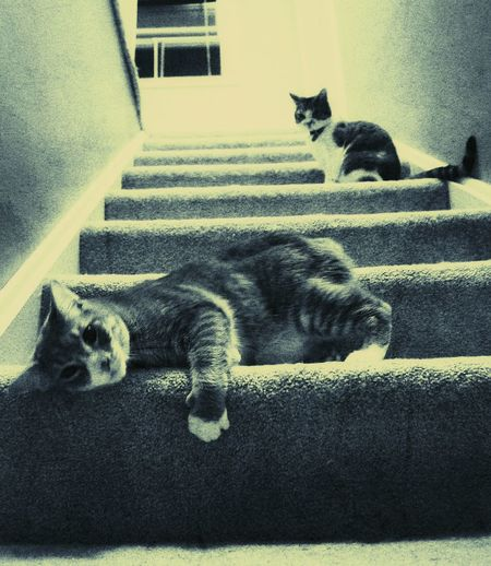 Catnip, kitty's and stairs lol Getting Inspired Check This Out Cute Pets The Artsy Lens Light And Shadow Cool Edit Black & White Stairs Monochrome FUNNY ANIMALS