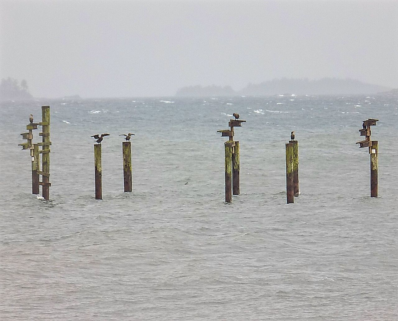 Riding out the storm Bcstorm Water Wooden Post Sea Waterfront Scenics Pole Nature Beauty In Nature Group Of Objects Ocean No People Seascape Stormy Weather Birds On Posts Birds Of EyeEm  Birds Birds Of EyeEm  Distant Water Wooden Post Tranquility Sea Vancouver Island Canada Pacific Northwest