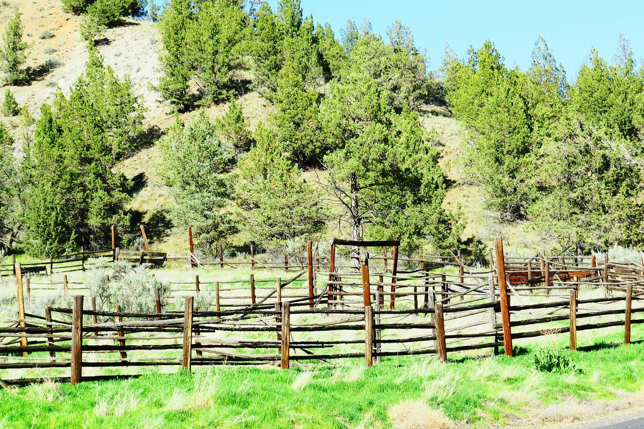 Tree Fence Non-urban Scene Remote Countryside No People Forgotten Times Forgotten Things Abandoned Country Outdoors Western Style Western My View Check This Out Forgotten Country Life Weathered Old Cowboy Style Found In The Forest Found