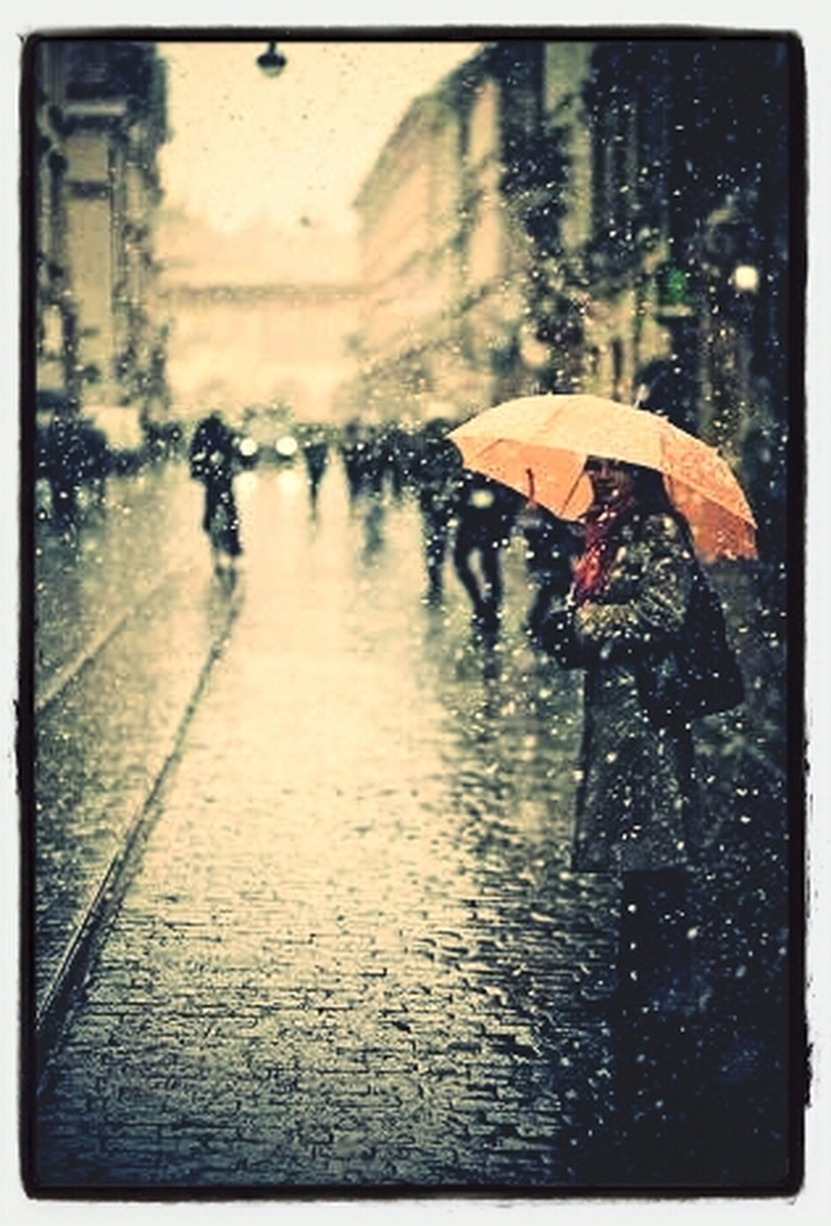transfer print, auto post production filter, wet, water, rain, street, reflection, season, transportation, one animal, men, close-up, day, outdoors, full length, glass - material, animal themes