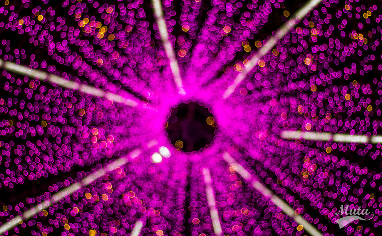 Backgrounds Blurred Bokeh Ceiling Close-up Flower Full Frame Illuminated Indoors  Low Angle View No People Purple Purple Flower