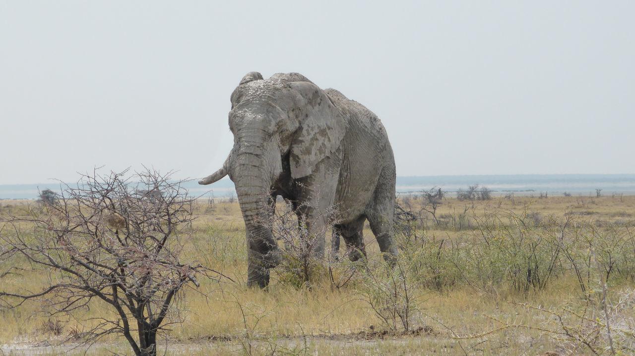 Beautiful stock photos of elefant, nature, elephant, sky, one animal