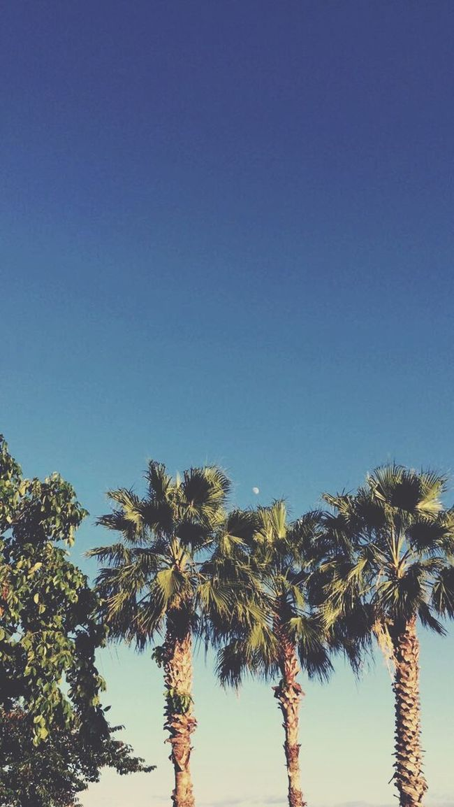 Palms Fall Palm Trees Moon Florida