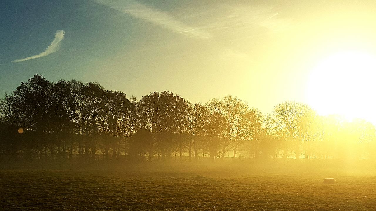 tree, nature, tranquil scene, tranquility, beauty in nature, landscape, sunlight, scenics, idyllic, field, no people, outdoors, sun, silhouette, sky, sunset, hazy, fog, day