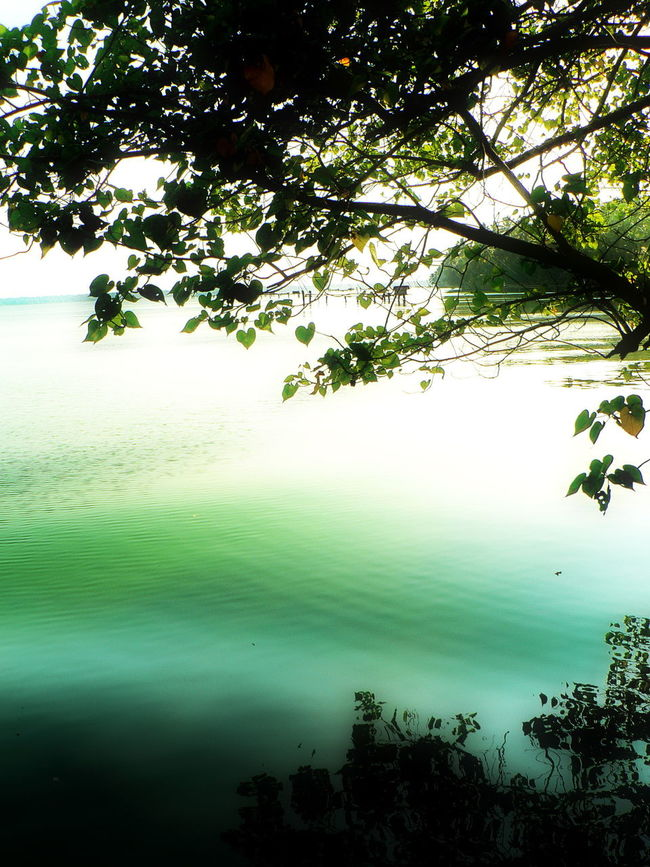 The captivating Beauty of Kerala!! Beauty In Nature Green Color Greenery Kerala Kerala India Natural Light Natural Reflection Nature Outdoors Peaceful Reflection Scenery Scenery_collection Scenic Serene Tranquil Scene Tranquil Water Tranquility Tree Reflection  Water Water Reflection Water Reflections