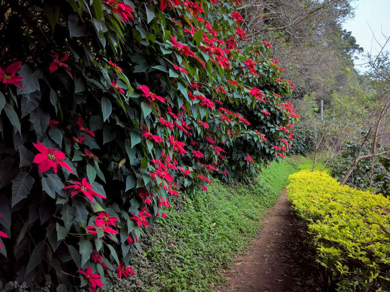 growth, plant, flower, nature, beauty in nature, outdoors, red, blossom, day, petal, freshness, no people, tranquility, leaf, fragility, blooming, flowerbed, tree, flower head
