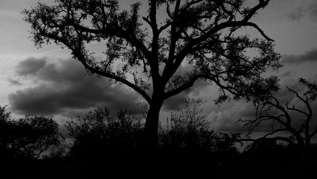 Tree Nature Branch Cloud - Sky No People Beauty In Nature Outdoors Black&white Photography Sky Day Eyeemnaturelover Tranquil Scene Tranquility Oak Trees Beautyinnature