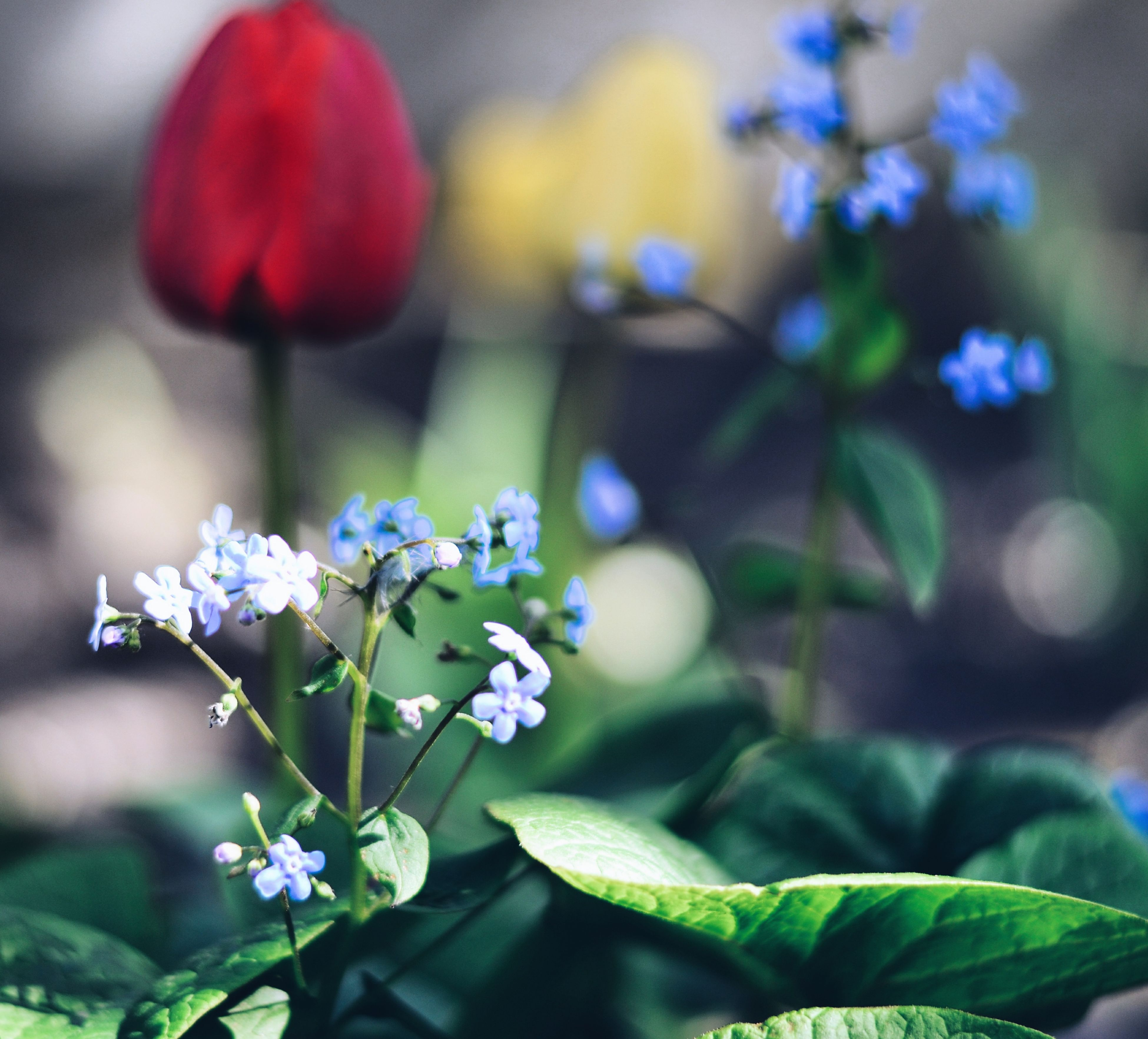 flower, freshness, fragility, petal, growth, focus on foreground, purple, beauty in nature, flower head, blooming, close-up, plant, nature, selective focus, in bloom, stem, park - man made space, outdoors, day, blossom