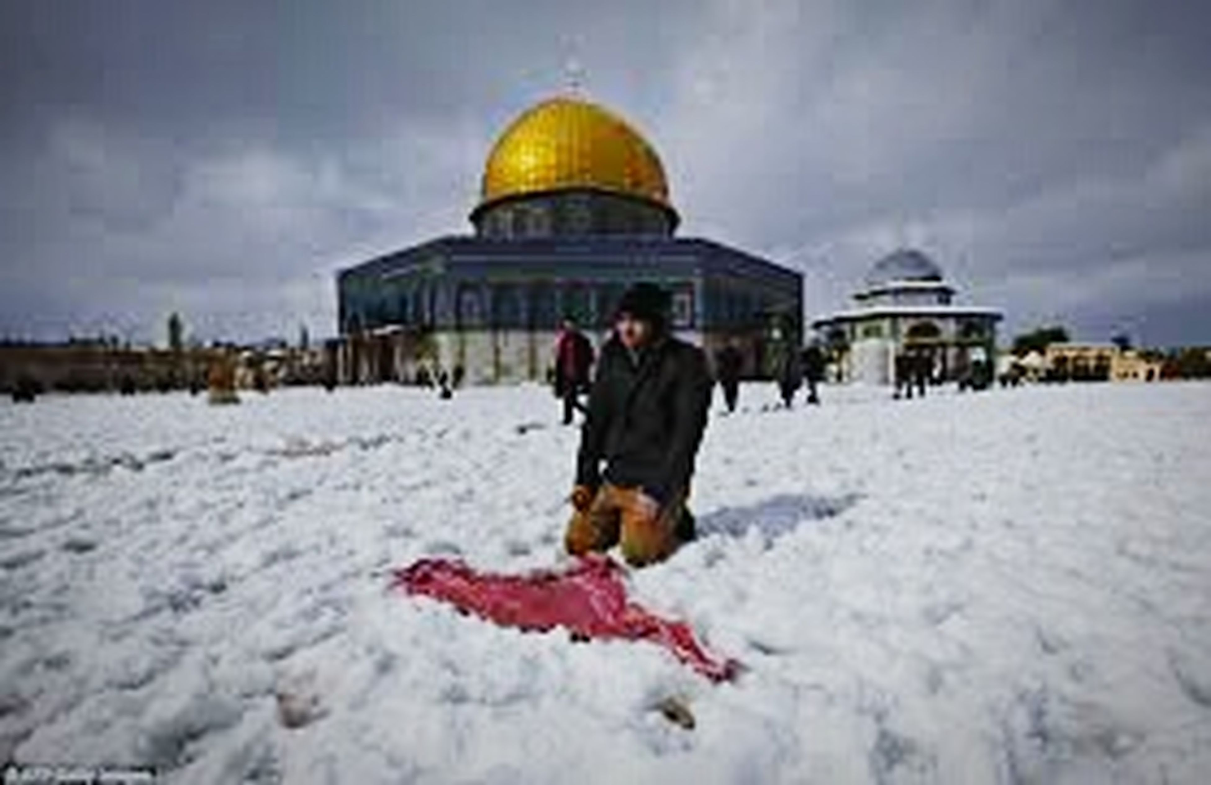 Palestine Will Rise Again. Palestine Will One Day Be Free♡ Palestinian Palestina My Love الاقصى شرف المسلمين غزة_تنتصر فلسطين_تقاوم الاقصى في حرية