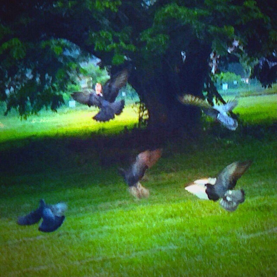 Flight Of The Doves Streamzoofamily Taking Photos Scenery