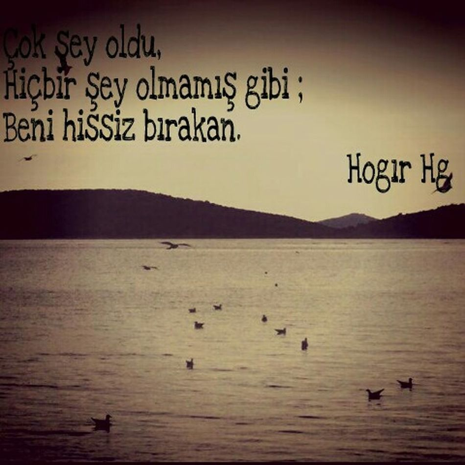 Classic HogırHg