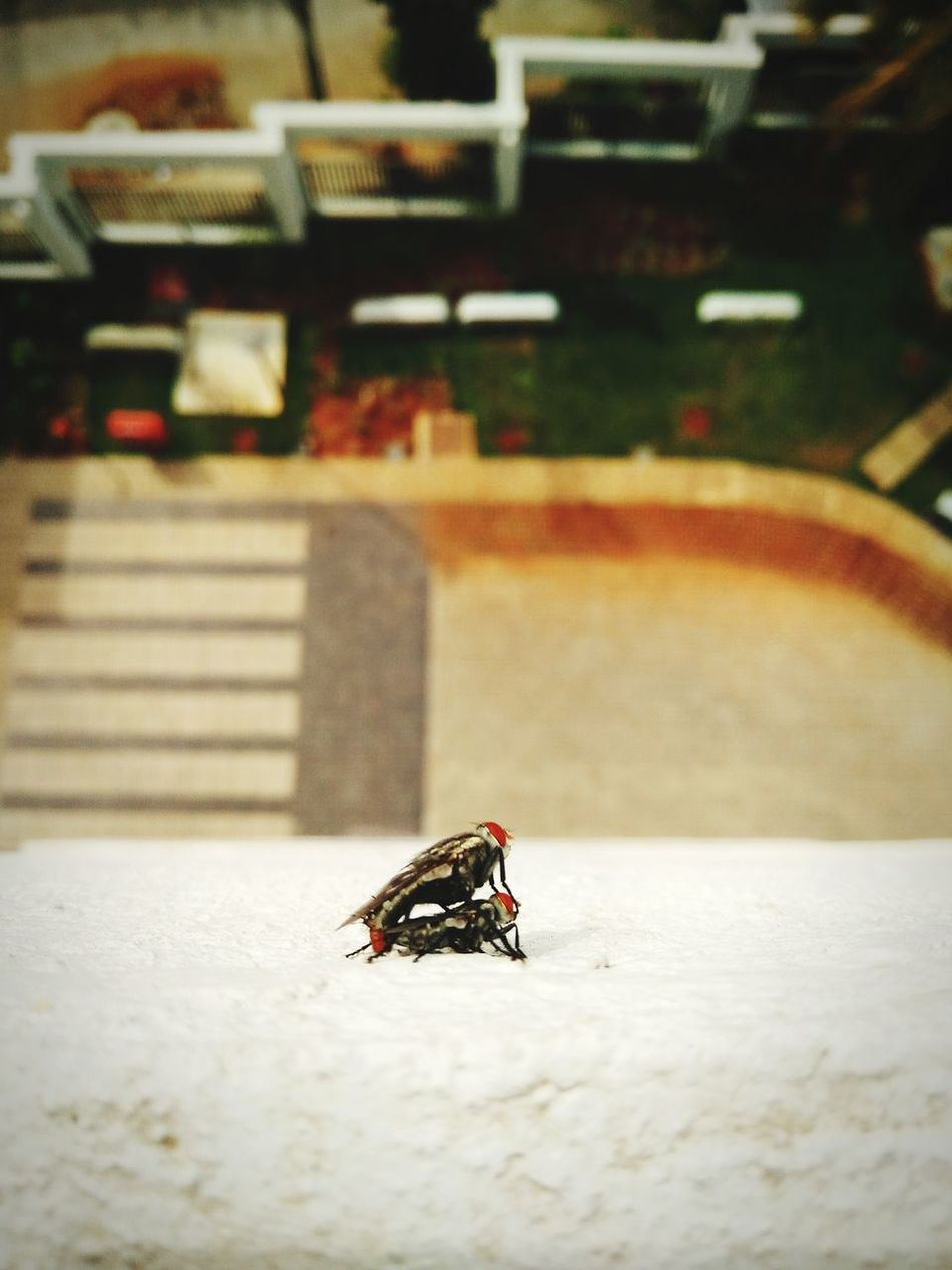 Insect Enjoying Life Taking Photos Beautiful Day Nature Undisturbed Macro Blah Random Mate Flies Gravity Altitude PhonePhotography Calm Green