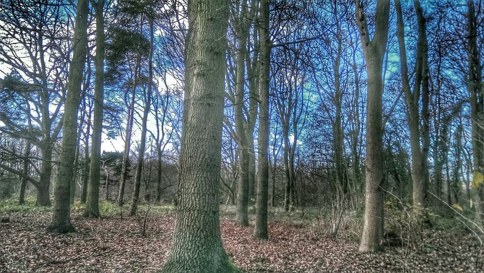 Winter Trees Hugging A Tree Nature_collection Winter Woodland Bare Branches Dark And Light