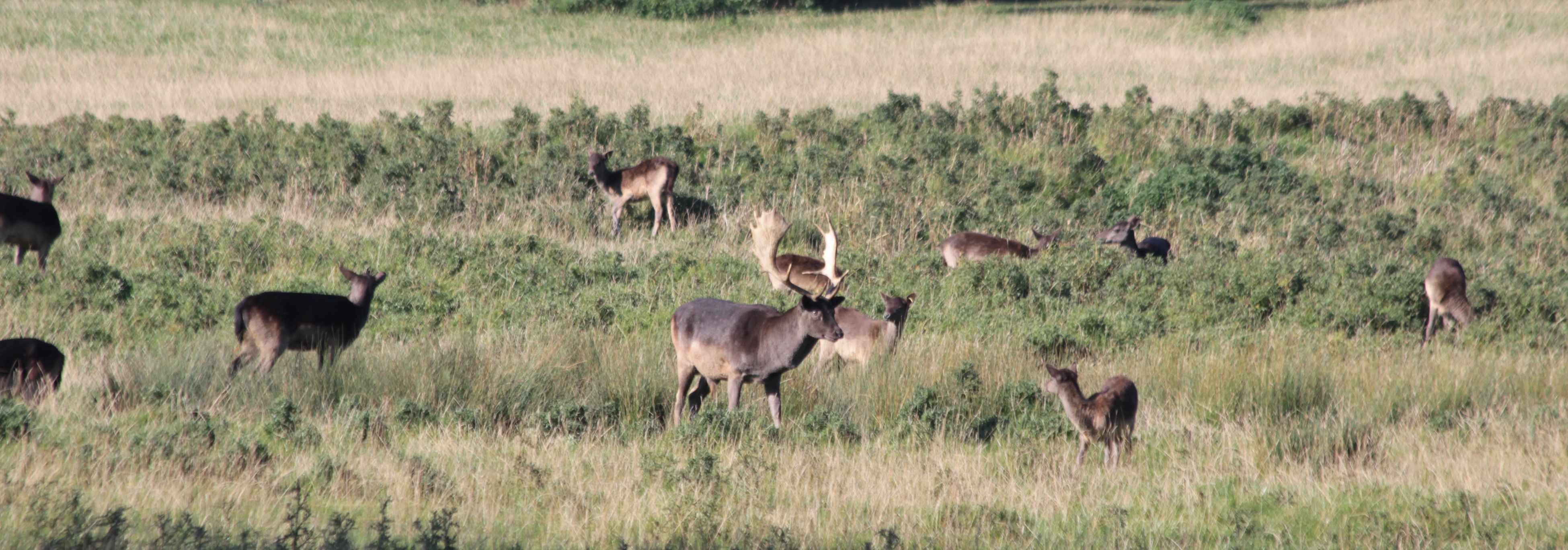 animal themes, grass, field, animals in the wild, wildlife, grazing, nature, landscape, grassy, herd, medium group of animals, livestock, growth, beauty in nature, rural scene, mammal, outdoors, day, no people
