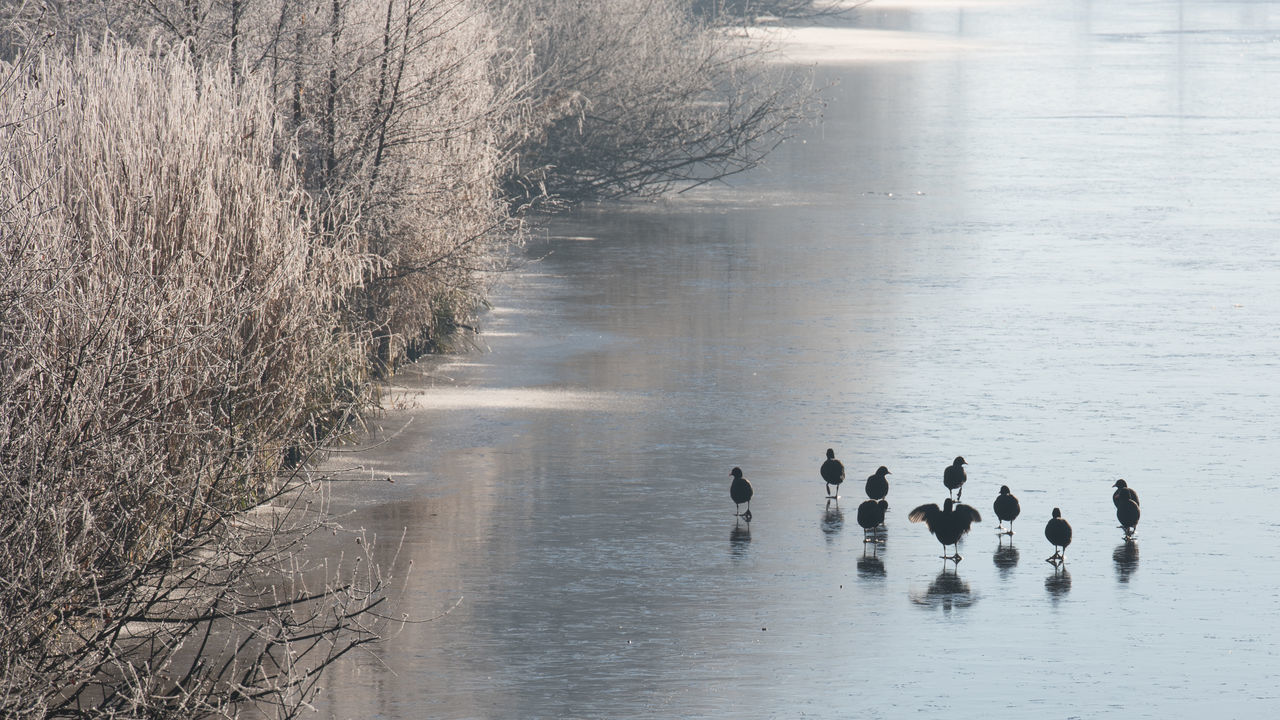 Winter in Ostfriesland Animal Wildlife Animals In The Wild Bare Trees Bird Frozen Ice Morning Motion Nature No People Outdoors Reflection Scenics Togetherness Tree Water White Frost Winter