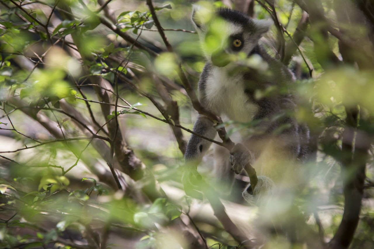 Animal Themes Animal Wildlife Animals In The Wild Close-up Day Mammal Nature No People One Animal Outdoors Tree