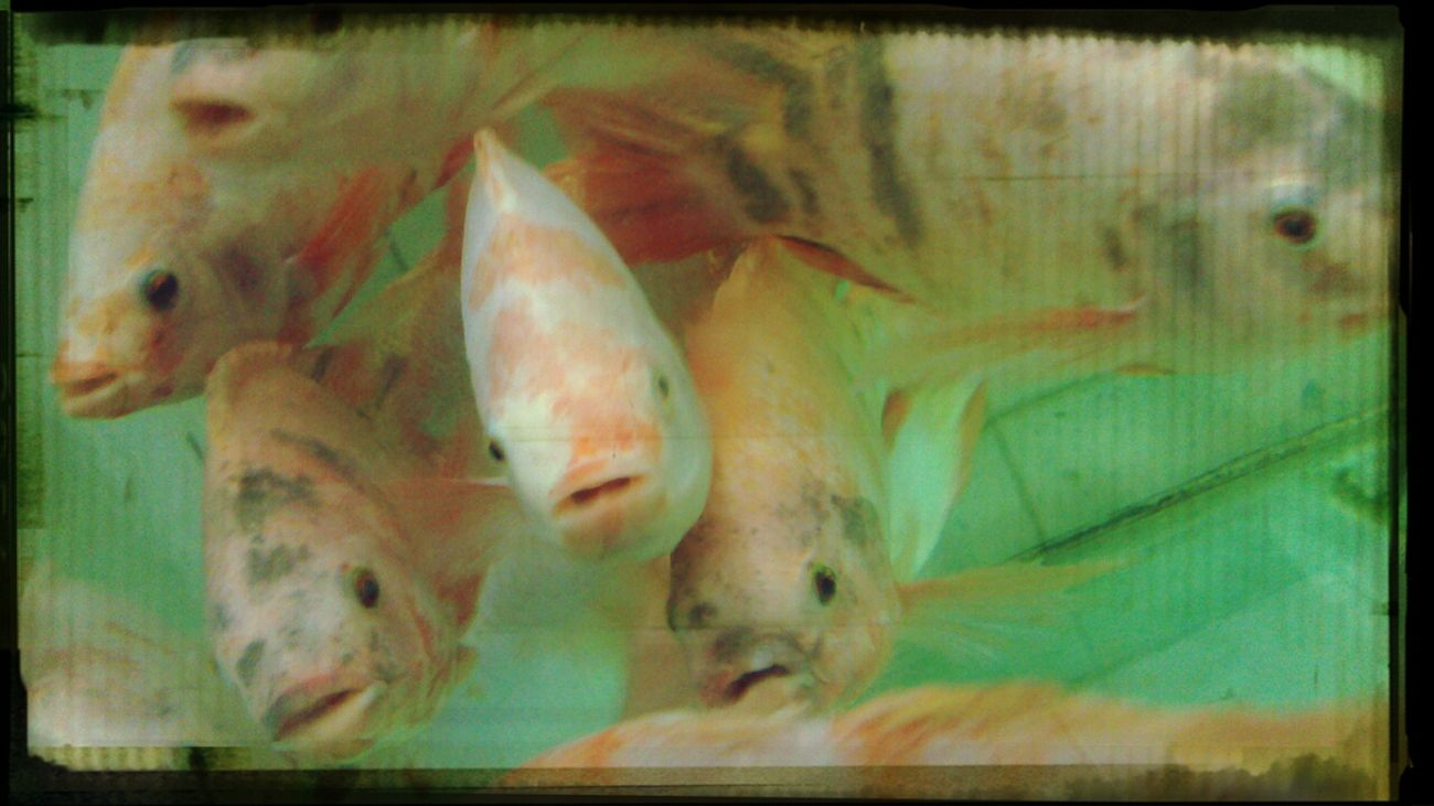 the fish's