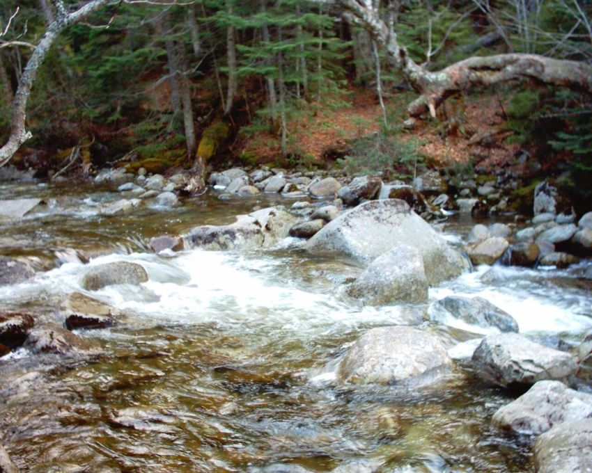 Water Stream - Flowing Water Creek Tranquility Motion Rocky Stream