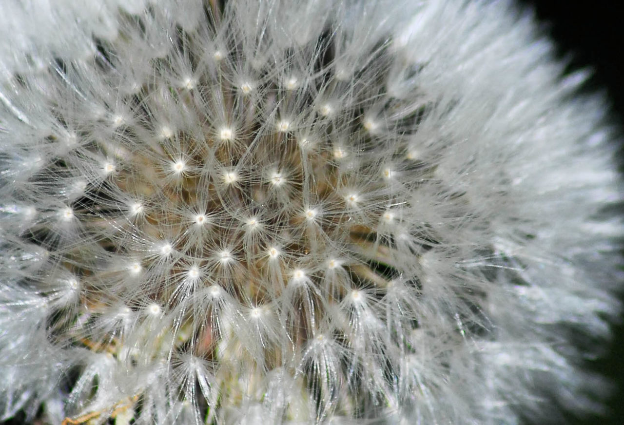 Close-up Colors and patterns Dandelion Seed Extreme Close-up Focus On Foreground Fragility Freshness Plant Sharp Spiky Tranquility Maximum Closeness Bokeh Photography Bokeh Day Outdoors Nature