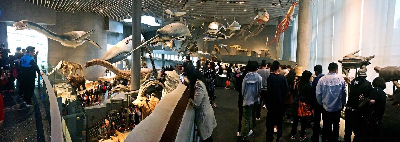 Museum Natural Science Museum  NaturalScienceMuseum Store Large Group Of People Real People Men People Adult Indoors  Occupation Adults Only Amazing Amazing Architecture Love Creature Lifestyles Sunshine Holiday Hanging Out