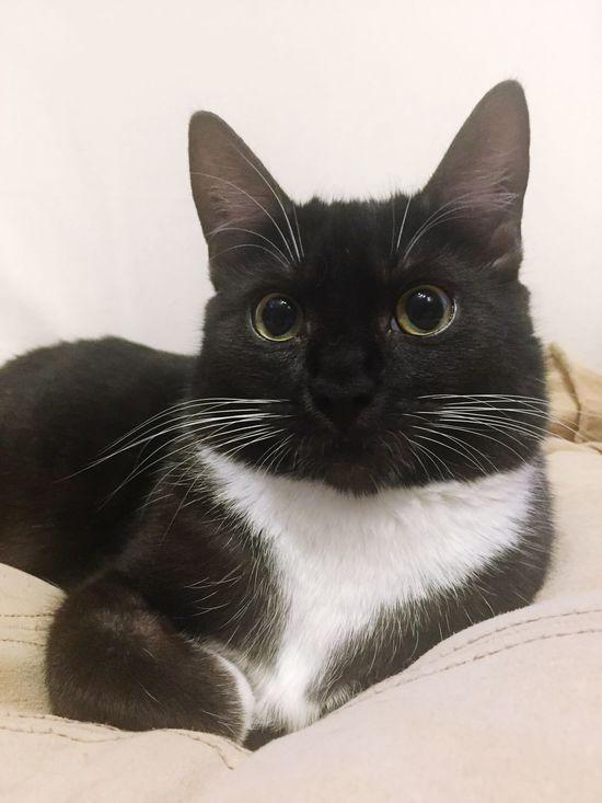 Cat Black Cat Black And White Cat Kitten 🐱 Kitten Schwarze Katze Schwarz Weiße Katze Gatto Gatto Nero