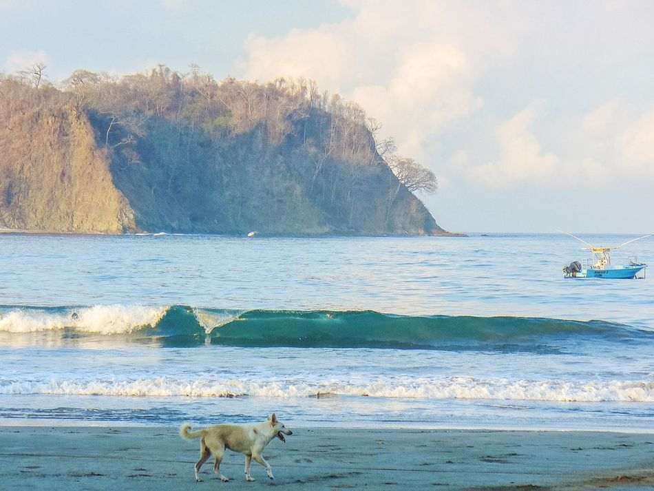 Island Water Beach Animal Themes Dog One Animal Pets Nature Domestic Animals Scenics Lifestyle Shore Coastline The Simple Life Beauty In Nature Outdoors Day Rock - Object Sand Horizon Over Water Shoreline Beachlife Beach Life Boat On Water Dog On Beach