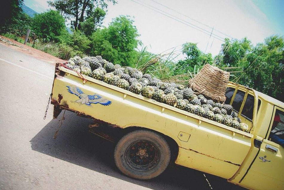 OpenEdit Car Enjoying Life Pineaple  Fruit Farm Life Thailand Life ระหว่างทาง