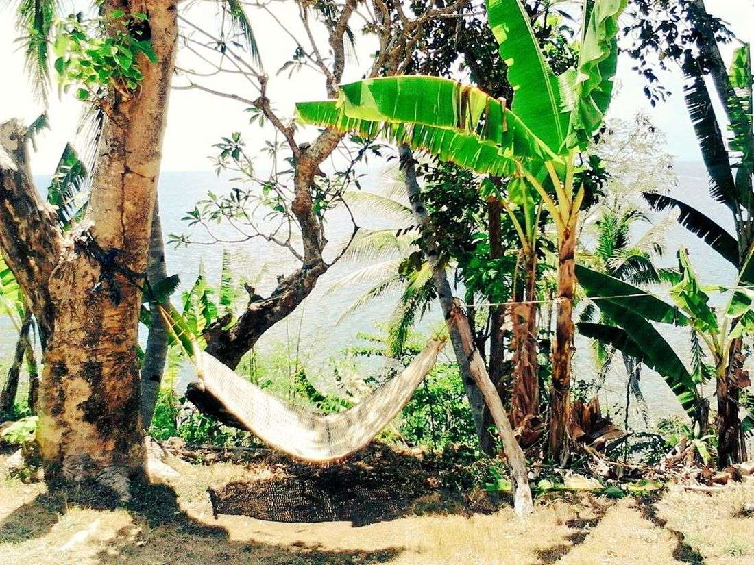 serenity. Relaxing Enjoying Life Eye For Photography EyeEm Calming Image Calming Place Hammocklife Hammocktime Check This Out Hammock Trees And Sky Treescape Trees