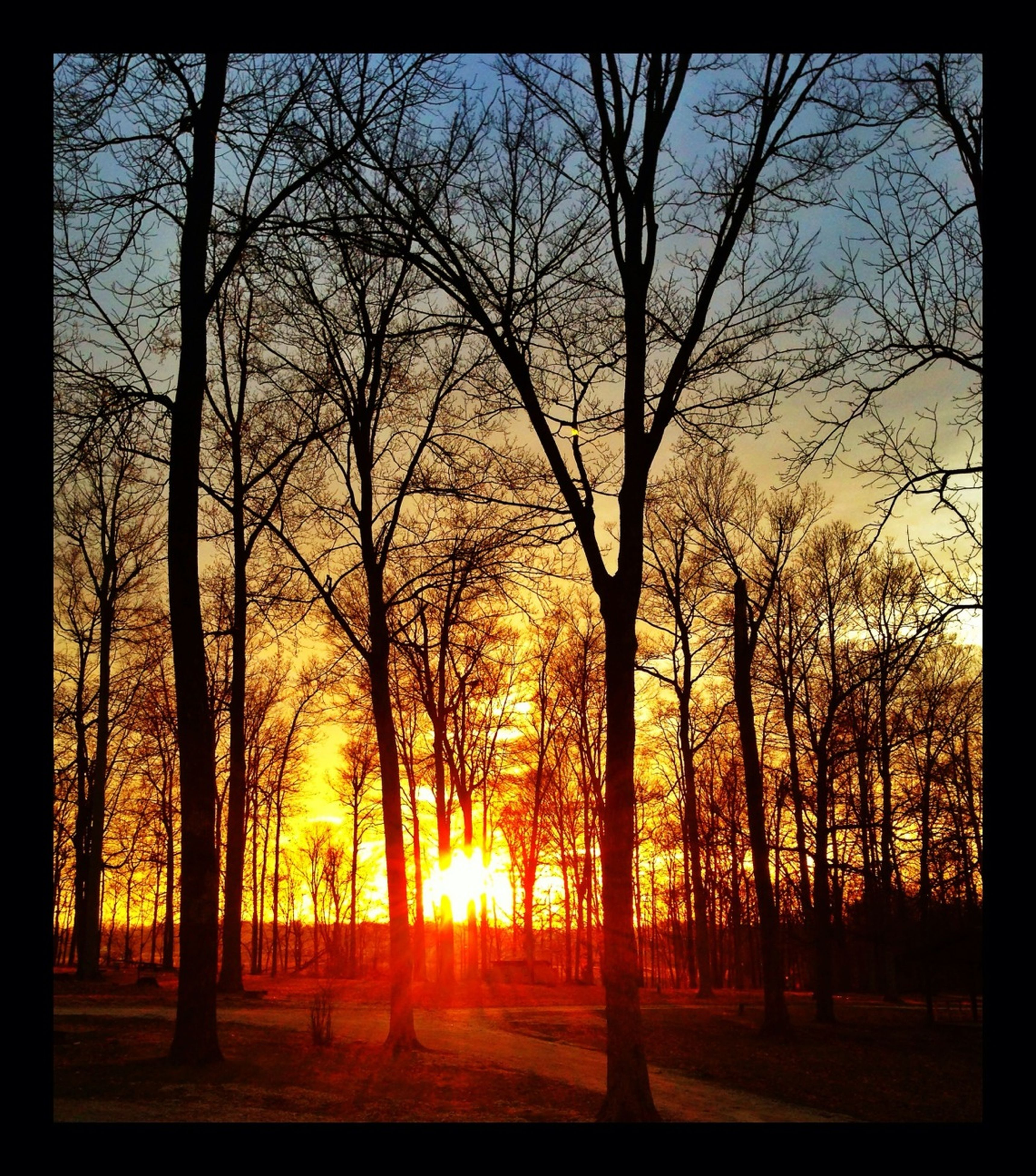 sunset, tree, sun, silhouette, orange color, tranquil scene, tranquility, scenics, beauty in nature, transfer print, bare tree, nature, sunlight, landscape, idyllic, sky, branch, auto post production filter, tree trunk, back lit