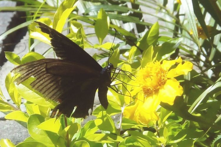 Beauty In Nature Flower Head One Animal Yellow Flower Nature Animals In The Wild Freshness Beautifully Organized Betterfly Happiness Beauty In Nature Insect Outdoors