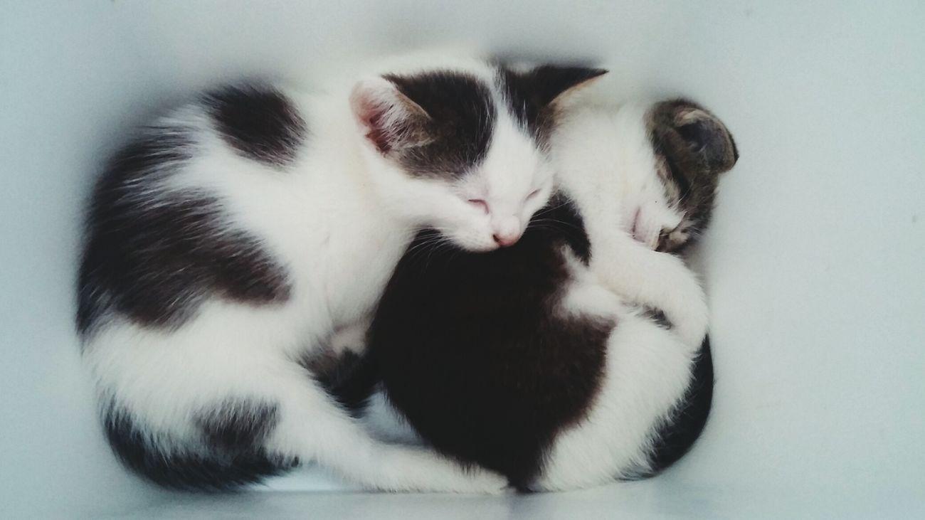 Little cats Little Cats Kitty Small Kitty