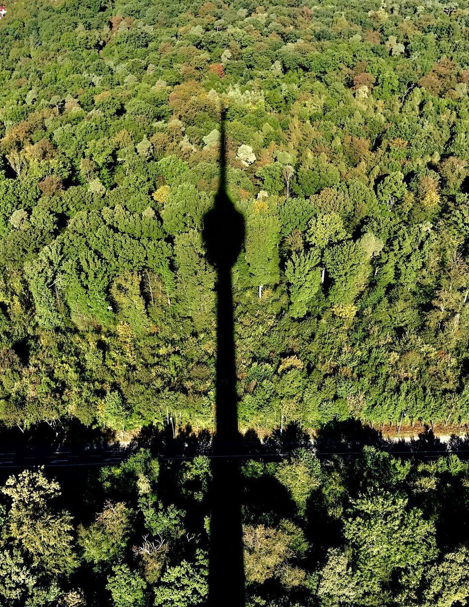 TV Tower Green Color Sunlight Nature Tree Scenics Shadow Stuttgart