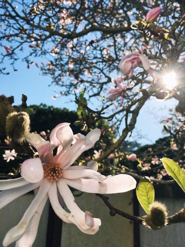 Fleurs Flower Tree Blossom Beauty In Nature Fragility
