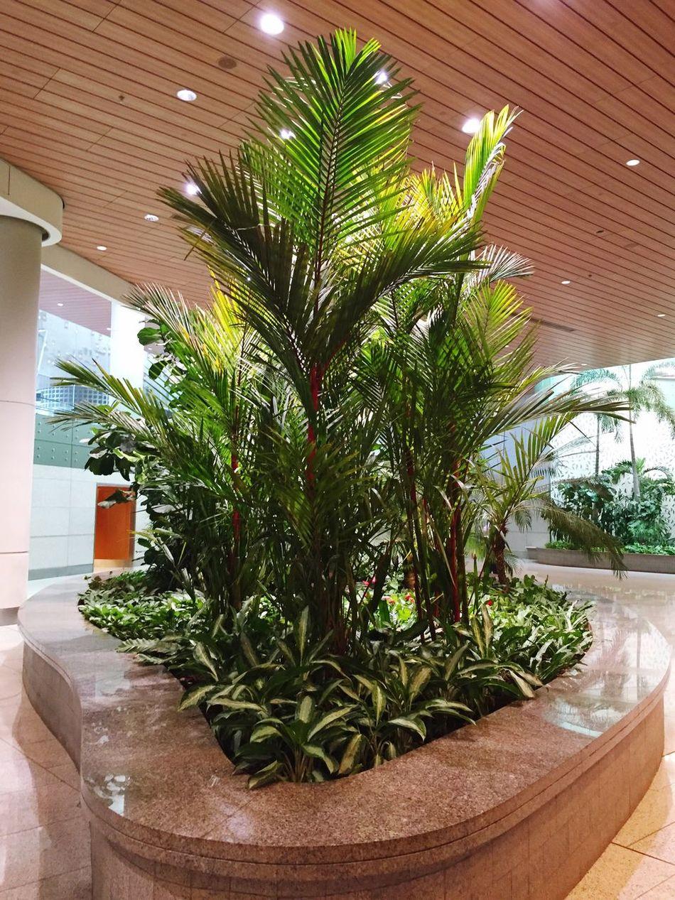 Indoor Garden Indoor Gardening Plants And Flowers Green Green Green!