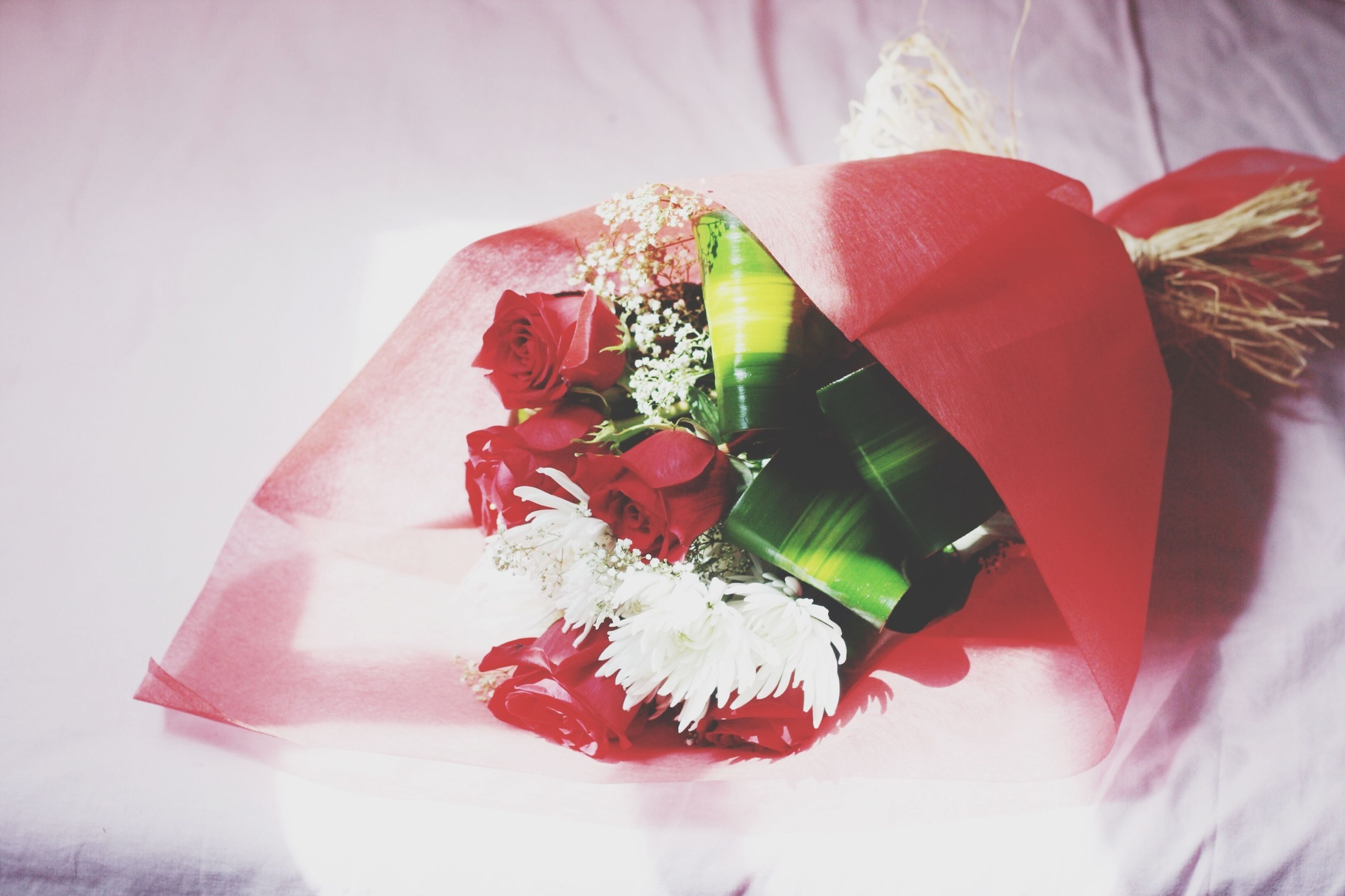 red, indoors, close-up, flower, petal, fragility, studio shot, decoration, still life, freshness, leaf, no people, rose - flower, white background, pink color, home interior, single object, nature, wall - building feature, beauty in nature