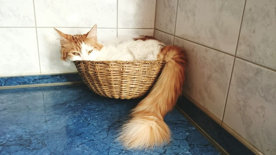 Beautiful stock photos of funny animal, Animal Themes, Basket, Built Structure, Cat