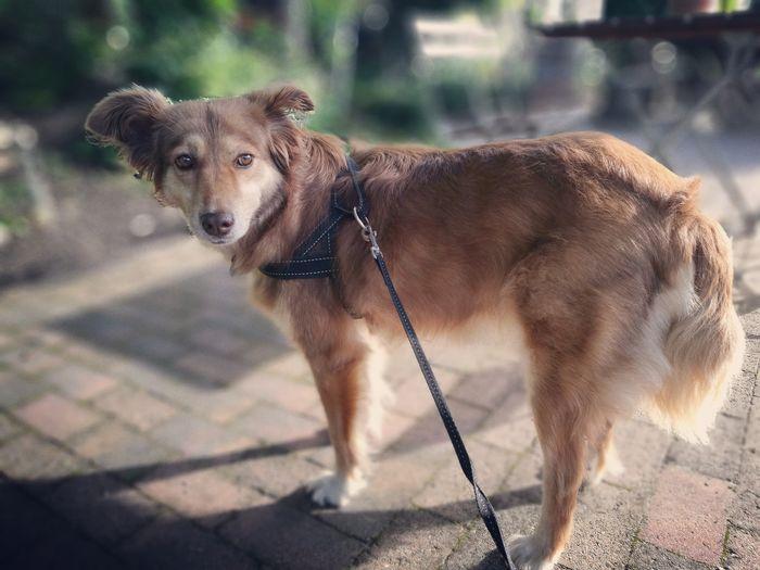EyeEm Selects Dog Pets Animal One Animal Domestic Animals Outdoors Mammal Day Animal Themes No People Portrait Collar