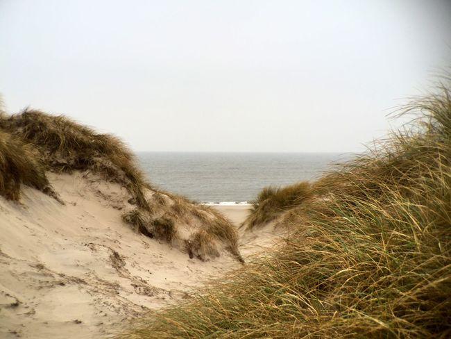 Seaside Dunes Amrum Beach Winter Nature