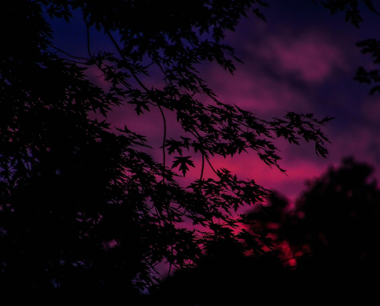 tree, nature, beauty in nature, no people, tranquility, sky, growth, low angle view, silhouette, outdoors, scenics, night, branch, scenery